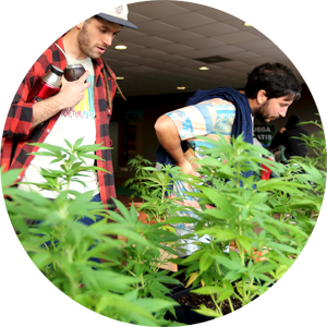 Cannabis Business Training