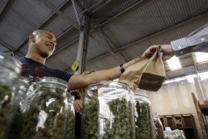 California university for cannabis