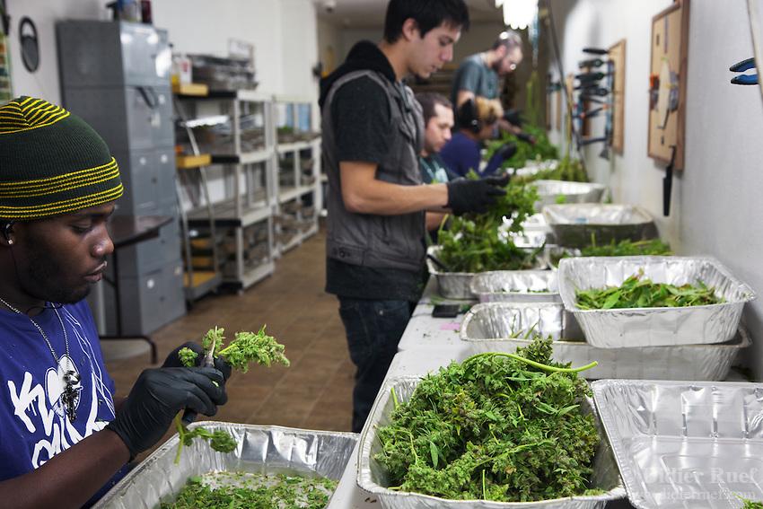 California Academy for cannabis