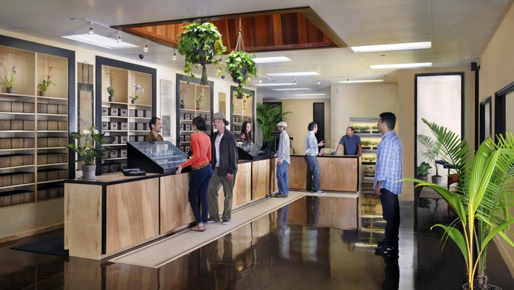 California Marijuana Dispensary Business Paperwork