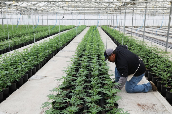 How To Start Cannabis Business In Florida