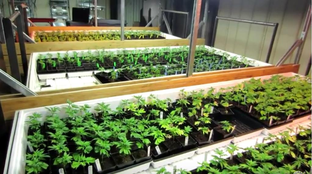 How To Grow Marijuana Book