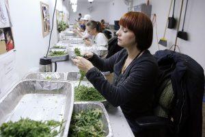 California college for pot