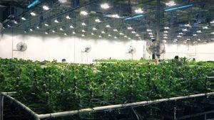 California marijuana business applications