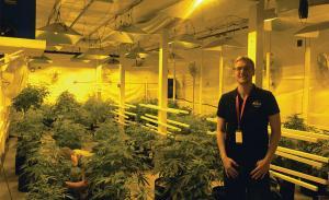 Recreational marijuana manufacturing application